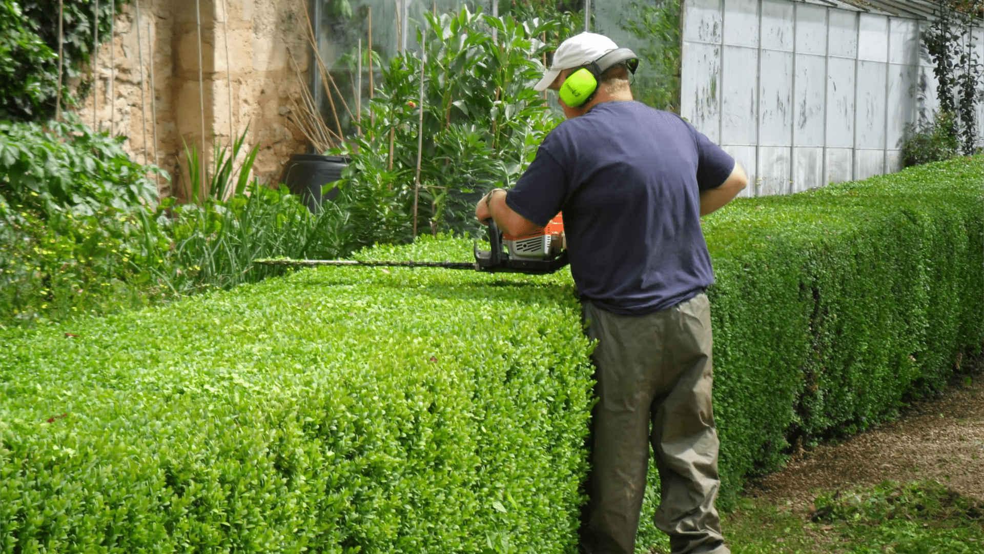 Обслуживание зеленых насаждений